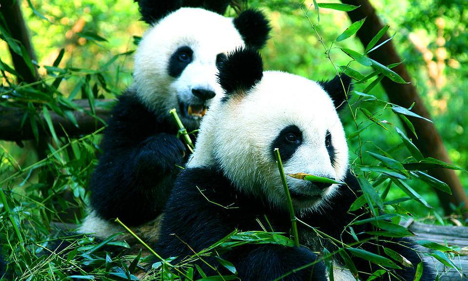 China holidays with Panda.jpg