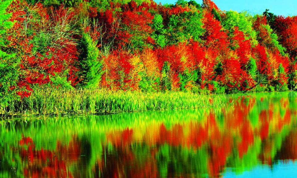 Tour Sichuan autumn trees.jpg